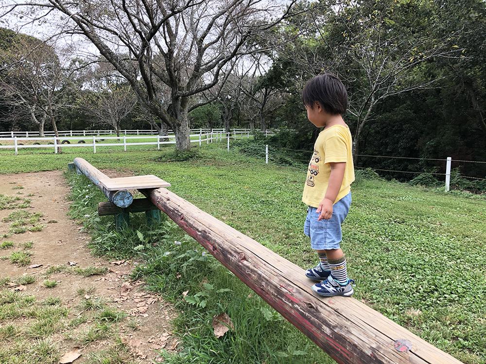 成田ゆめ牧場でのアクティビティー