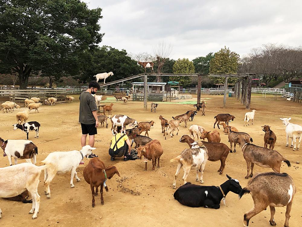 成田ゆめ牧場で動物たちと触れ合える特典